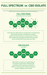 Full-Spectrum vs CBD Isolate Infographic